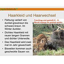Präsentation Schwarzwild