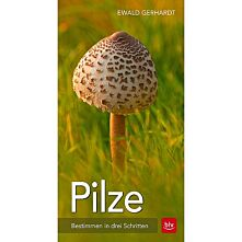 Pilze - Bestimmen in drei Schritten