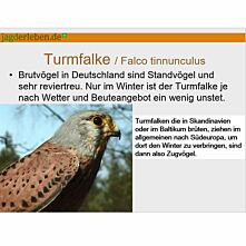 Präsentation Greifvögel und Eulen