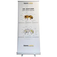 Die Anatomie der Honigbiene Roll-Up 85x200 cm