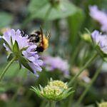 12 Wildbienen-Pflanzen